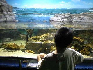 碧南海浜水族館 中