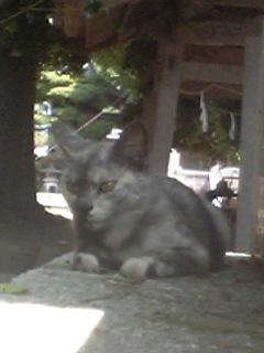 神社の子猫