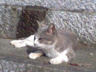 神社の猫2