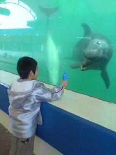 イルカと息子