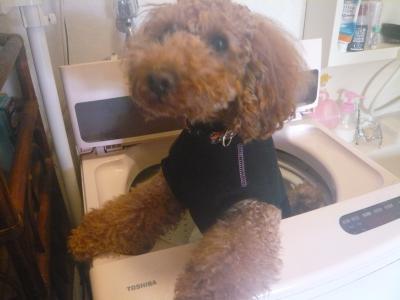 ちゃおin洗濯機