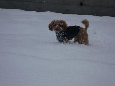 また雪だ~♪