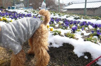 オチリ&お花
