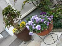 玄関お花その1