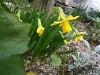 玄関お花その2