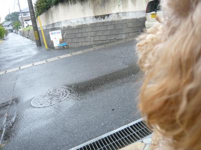 雨だねーーー