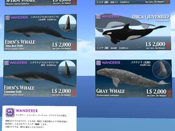 100930コククジラ発売