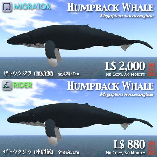 ザトウクジラポップ