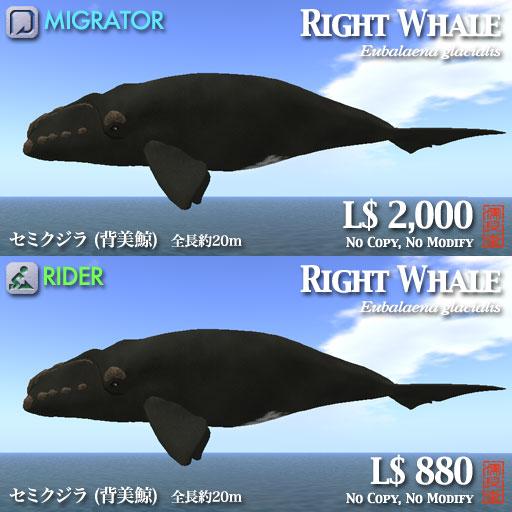 セミクジラポップ