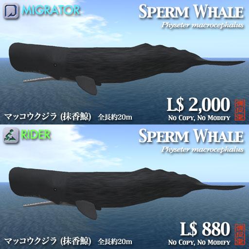 マッコウクジラポップ