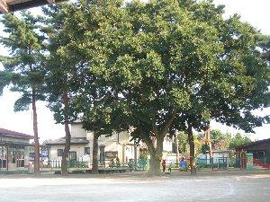 この木なんの木、きになる木~♪