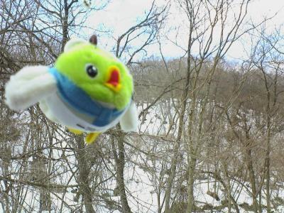 雪の上を飛んでるよ~~!!