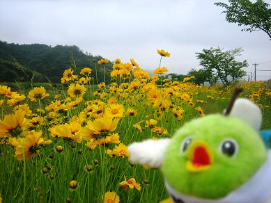 お花畑みたい!
