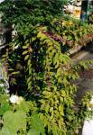 plants2s.jpg