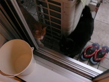 090107cats.jpg