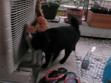 090116cats1.jpg