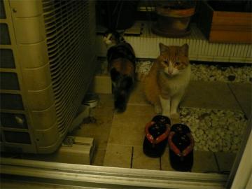 090215cats.jpg