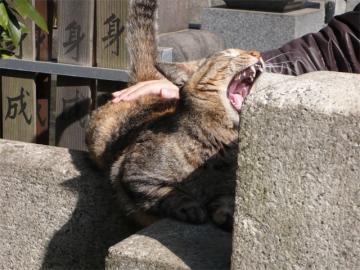 090308cats2.jpg