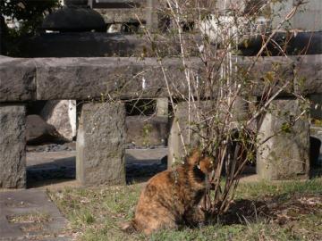 090308cats3.jpg