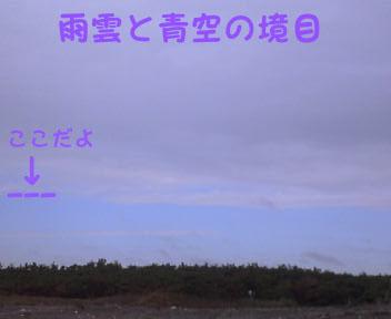 こじか02