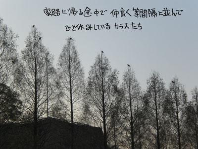 大阪城 カラス