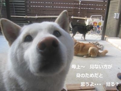 IMG_3239.jpg