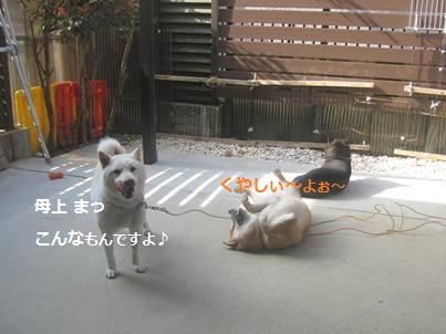 IMG_4269.jpg