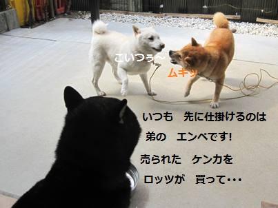 IMG_4374.jpg