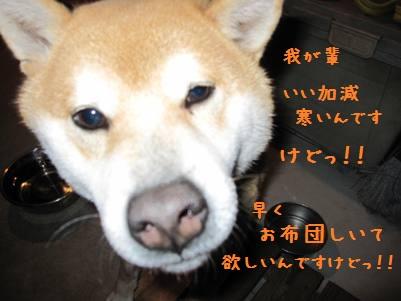 IMG_7497_20110302230408.jpg
