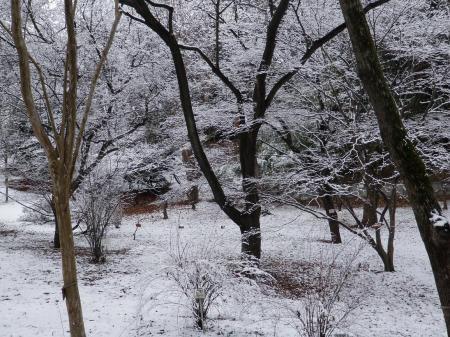 100217雪景色 (7)30