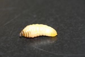 100728アシナガバチ (3)70