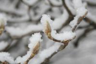 110209雪景色 (3)70
