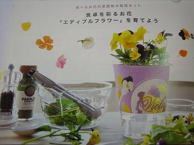 グリーン②2010.10.28