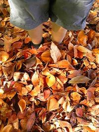 落ち葉達。