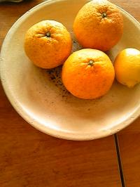 柑橘の会。
