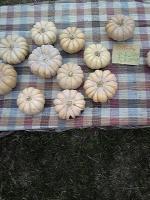 かぼちゃ達。