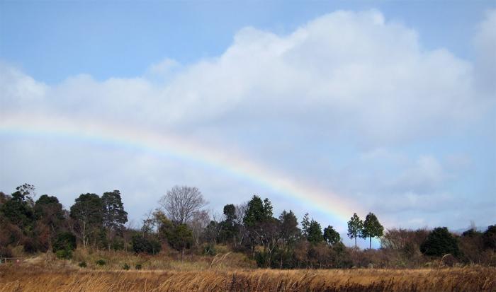 美しい虹IMG_7853