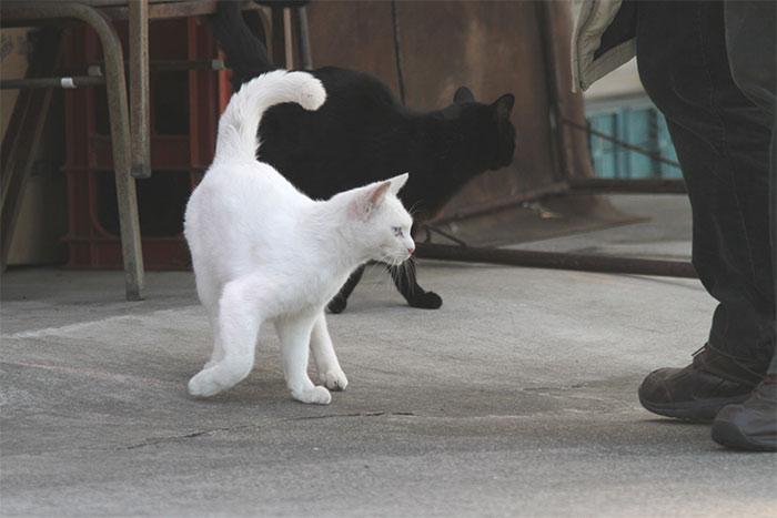 猫IMG_2795