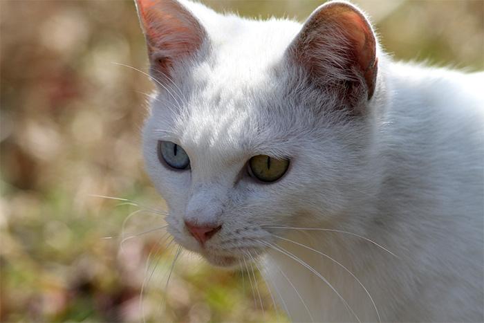 猫IMG_2798