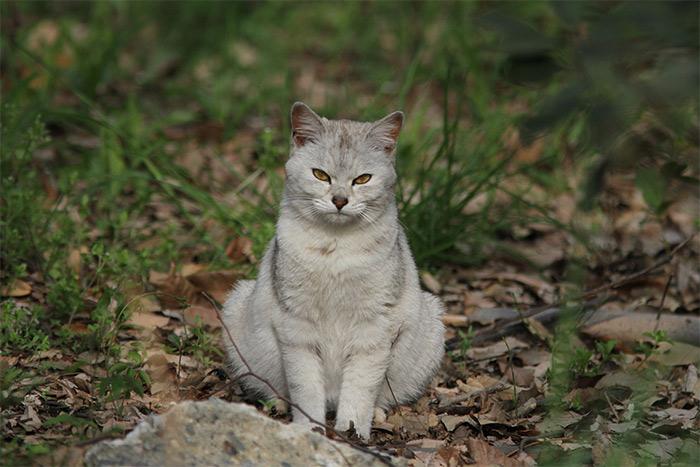 猫IMG_6233