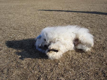 035_convert_20110126212229.jpg