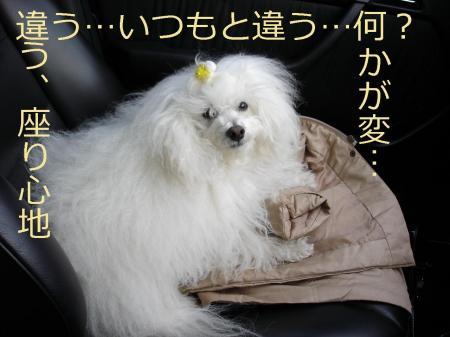 001繝悶Ο繧ー_convert_20100204142701