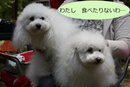 084繝峨Ν繝√Ν_convert_20100609125448
