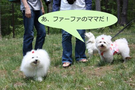 091繝悶Ο繧ー_convert_20100609124324