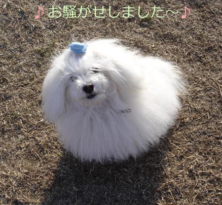 025繝悶Ο繧ー_convert_20110126212018