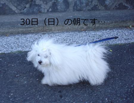 007繝悶Ο繧ー_convert_20110130201350