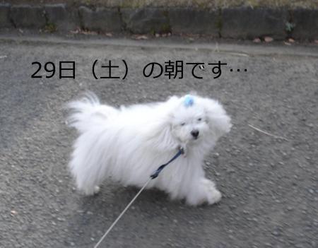 001繝悶Ο繧ー_convert_20110130201205