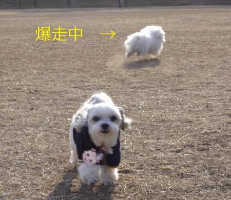 003繝悶Ο繧ー_convert_20110203002051