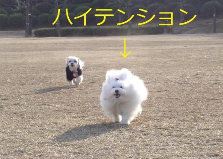 002繝悶Ο繧ー_convert_20110203002026