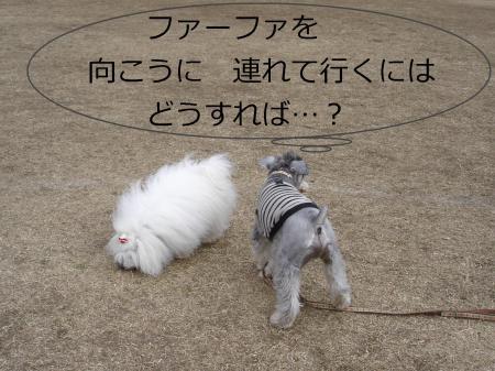 013繝悶Ο繧ー_convert_20110203002227